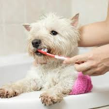 how to make homemade toothpaste for dogs