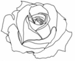 Small Picture Drawn rose cute Pencil and in color drawn rose cute