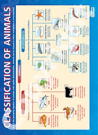 Animal Classification Chart Classification Of Animals Chart Animal Science Science