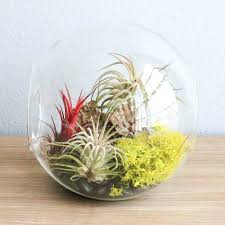 Hanging Air Plant Containers Premium Terrarium Kits Air Plant Supply Co  Architectures Hanging Air Plant Holder