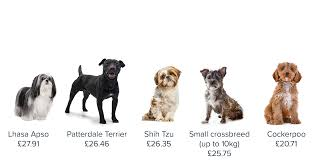 Pet business insurance, dog walking insurance, pet sitting insurance, dog grooming insurance, pet boarding, kennels insurance, liability, equipment & more. The Five Cheapest And Most Expensive Dog Breeds To Insure Bought By Many