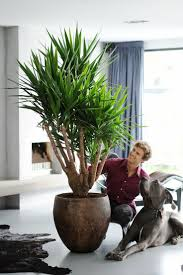 best indoor plants for office. Uncategorized Planters For Indoor Plants Appealing Best Office Gardening Pic Popular And