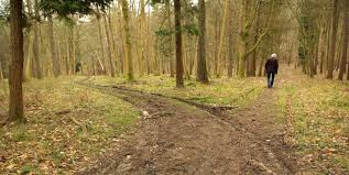 robert frost the road not taken essay ccss aligned socratic  essays and diversions the road not taken the road not taken