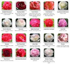 Peonies By Color Via Hyperactive Farms Flowers Peonies