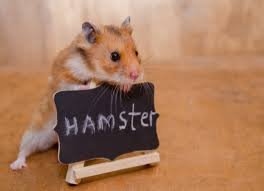 hamster ile ilgili görsel sonucu