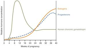 Estradiol Levels During Pregnancy Chart Maternal Changes During Pregnancy Labor And Birth