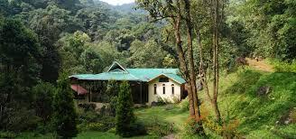 tree house resort. The Eco-adventure Resort In Magical Destination!.. Tree House Wayanad