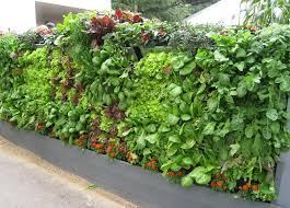 two vertical planters put your garden wall space to good use producing a living wall vertical vegetable gardensdiy