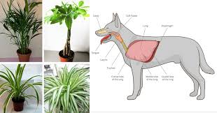 these 11 plants purify the air from cancer causing chemicals and are safe for cats and dogs family life goals