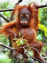 real jungle animals monkeys. Exellent Animals I Want Him With Real Jungle Animals Monkeys W