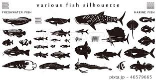 魚のシルエット素材集のイラスト素材 46579665 Pixta