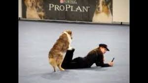 Freestyle Dog Dancing - Vanda Gregorova & All That Brandy Gentle ...