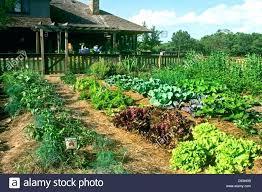 texas gardening guide large fenced in vegetable garden grows full sun early summer gardening planting guide texas gardening