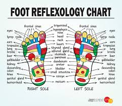 Reflexology Chart Foot Reflexology Chart Vector Stock Vector Colourbox