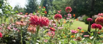 okl 10 steps to a dreamy cutting garden