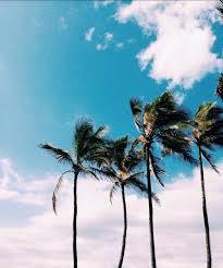 palm trees tumblr. Beach, Boho, Clouds, Fun, Girl, Happy, Island, Ocean, Palm Tree, Trees, Paradise, Rad, Sand, Sky, Summer, Sun, Tropical, Tumblr, Vogue, Water, Trees Tumblr