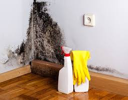 4 signs your home has toxic black mold
