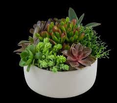 cool office plants. great office plants 25 best ideas on pinterest for cool e