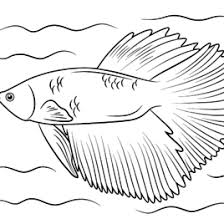 Small Picture Betta Fish Coloring Page Kids Drawing And Coloring Pages Marisa