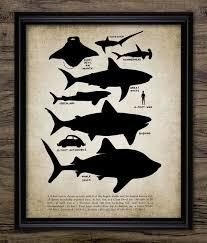 Shark Size Chart Shark Educational Print Shart Size Chart Shark Illustration Shark Decor Marine Decor Single Print 1019 Instant Download
