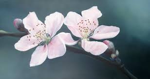 cherry blossoms painting fresh oil painting on