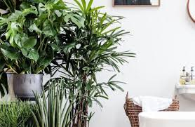 lighting : Indoor Lights Stunning Light For Plants Indoor Best ...