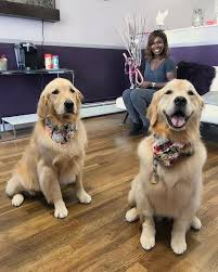 your dogs coat is the best window into their overall health and well being it s appearance texture and thickness all are tell tale signs of how well