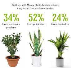 best indoor plants myfavoriteheadache myfavoriteheadache good best indoor plants