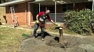 fabulous how to remove stump have maxresdefault diy tree