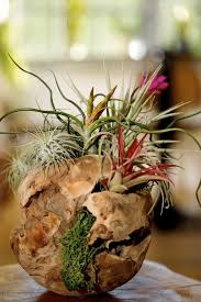 50 creative ideas to display your air plants in a most spectacular way home garden 2 50