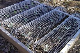 wire rolls covering plants