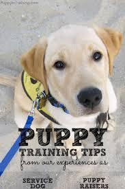 Dog Bathroom Accessories 17 Best Ideas About Service Dog Training On Pinterest Dog