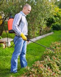 garden insecticide. A Man Sprays Pesticides In The Garden \ Insecticide E