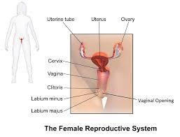 Vagina SexInfo Online