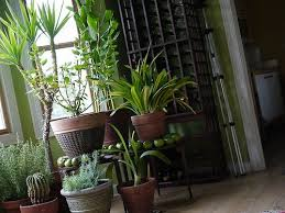 Decorating with Houseplants: Green, Clean and Low Maintenance
