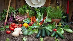 growing your own vegetable garden