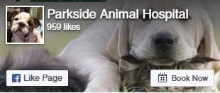 Skin - Allergies/Itching in Keller, TX | Parkside Animal Hospital