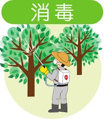 石川県金沢市の造園、庭木の剪定、伐採、草刈り、不要な庭石、灯籠の撤去のこと|アーク造園かなざわ