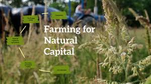 Farming For Natural Capital by Myrtle gregory on Prezi Next
