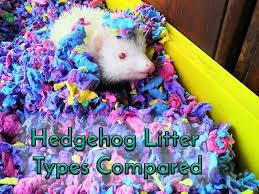 Cat Litter Comparison Chart Hedgehog Litter Types Compared Heavenly Hedgies