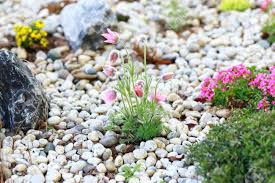 Small Picture Small Rock Garden Constructed With Rocks And Alpine Plants Stock