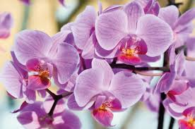 Paper Orchid Flower Orchid Photo Wall Paper Orchids Flower Mural Beautiful Flowers Xxl