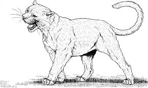 Small Picture Mountain Lion Coloring Pages GetColoringPagescom