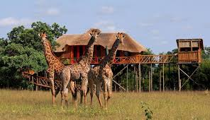 Treehouse Hotels U2013 Exotic Unique U0026 Unusual Hotels Of The WorldTreehouse Hotel Africa