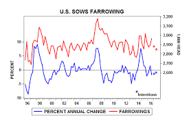 farrowing chart h p preview doane sees farrowing intentions below year ago