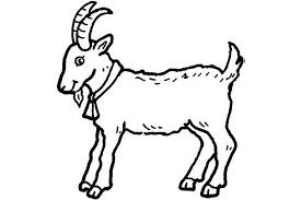Small Picture Pictures Of Animals Coloring Kids Goat The Farm Animal Coloring Pages