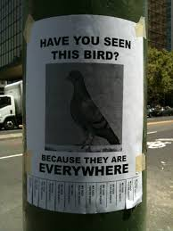 Lost Pet Flyer Maker 100 Signs For Missing Pets Who Aren't Actually Missing 92