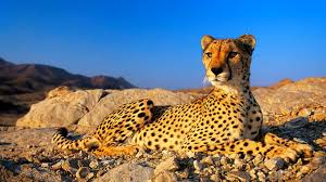 wild animals in african forest. Delighful African AFRICAN ANIMALS ARE AMAZING 2017  WELCOME TO THE JUNGLE And Wild Animals In African Forest E