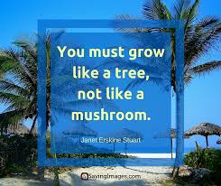 Tree Quotes Magnificent 48 Best Tree Quotes SayingImages
