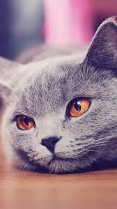 cat wallpaper tumblr iphone. Plain Cat Download To Cat Wallpaper Tumblr Iphone 5